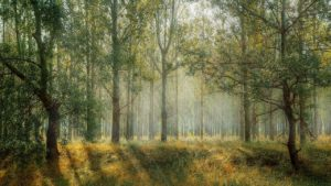 forest, trees, sun rays